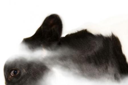 La vache celeste_Rethel_2012