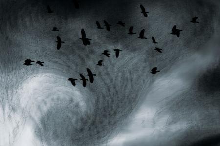 2010_Les eaux, paysages de l'ombre_II