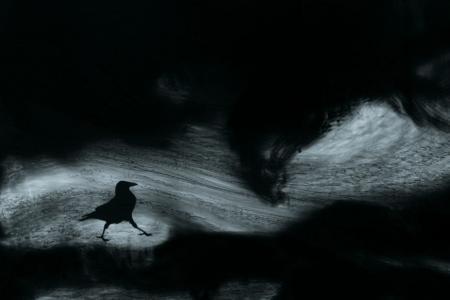 2010_Les eaux, paysages de l'ombre_VII