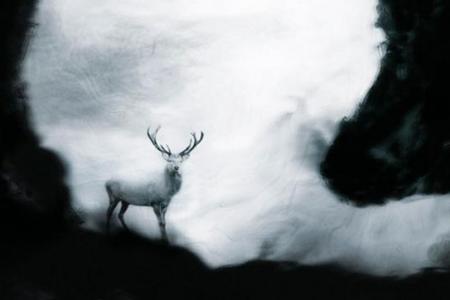 2012_Les eaux,paysages de-l'ombre, Le cerf