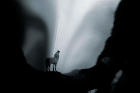 2012_Les eaux,paysages de l'ombre, Le coyote blanc