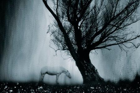 2013_Les eaux,paysages de l'ombre, V
