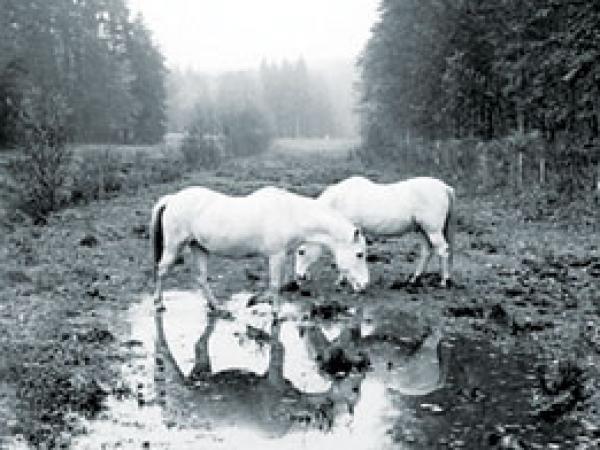 1994_2005_Paysage_2